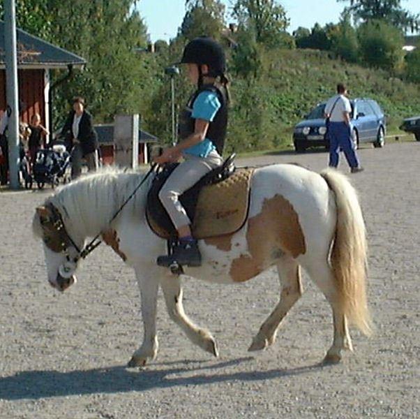 Hopptävling för ponny och storhäst