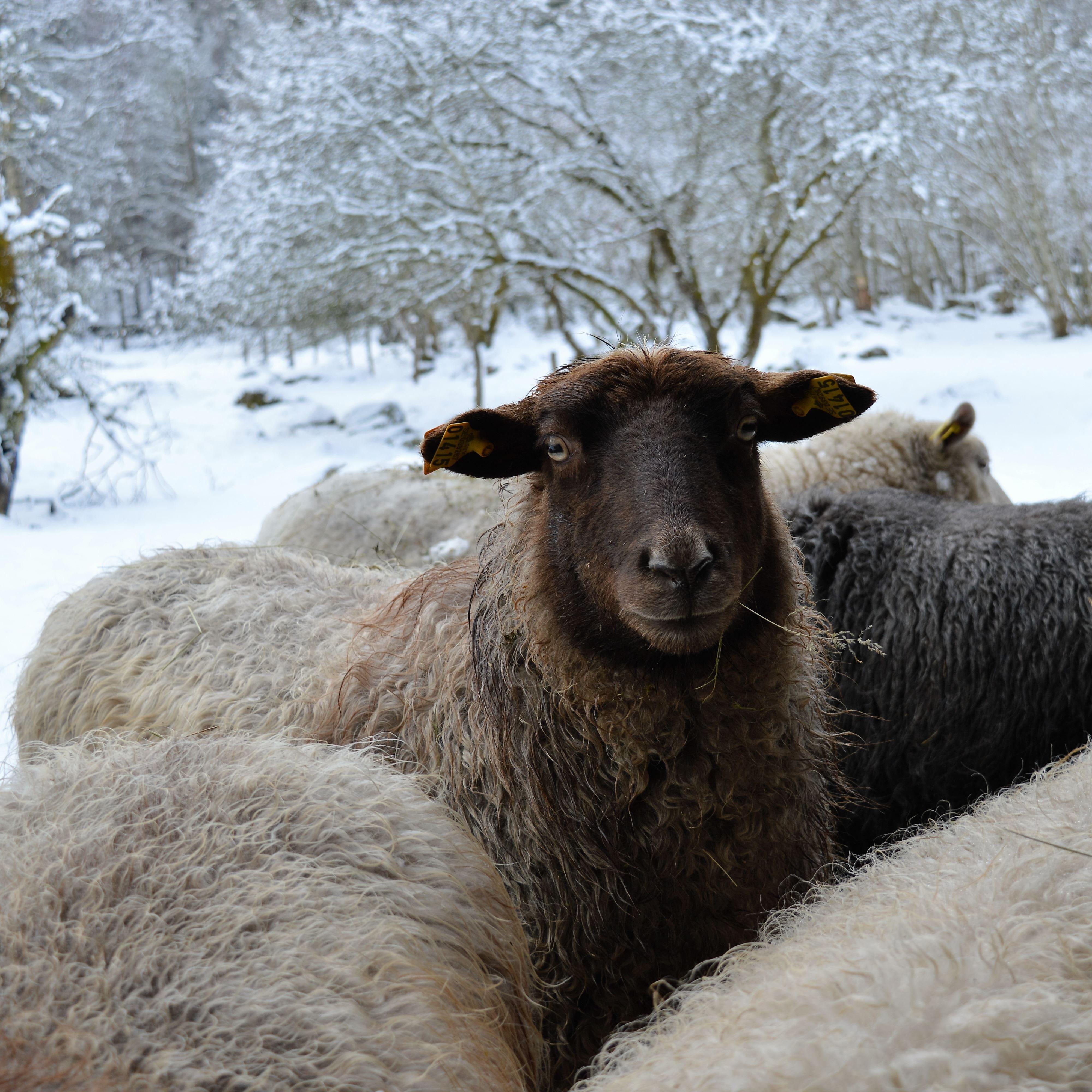 Vinter i Örnanäs