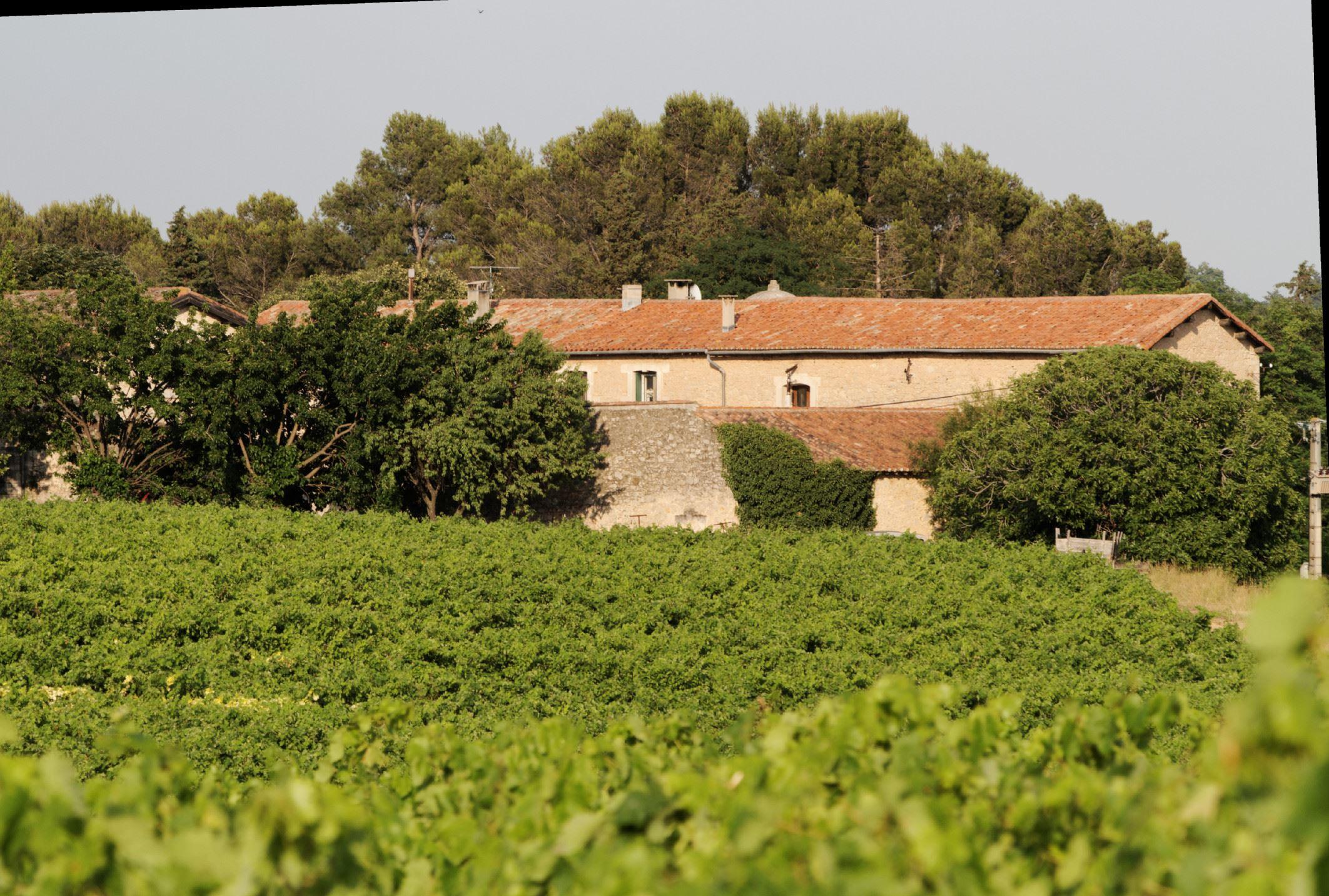 Paseo en los viñedos en cada estación Château de Fourques !