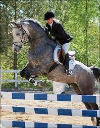 Hästhopptävling vid Norgrensgården