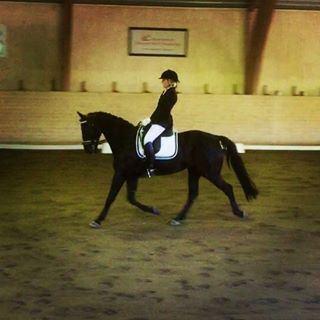 Hästdressyrtävling vid Norgrensgården