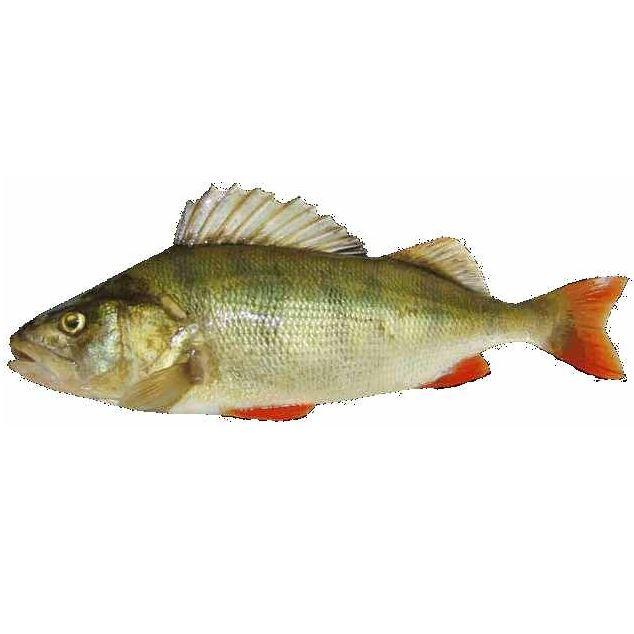 Hjärtasjön, fiske