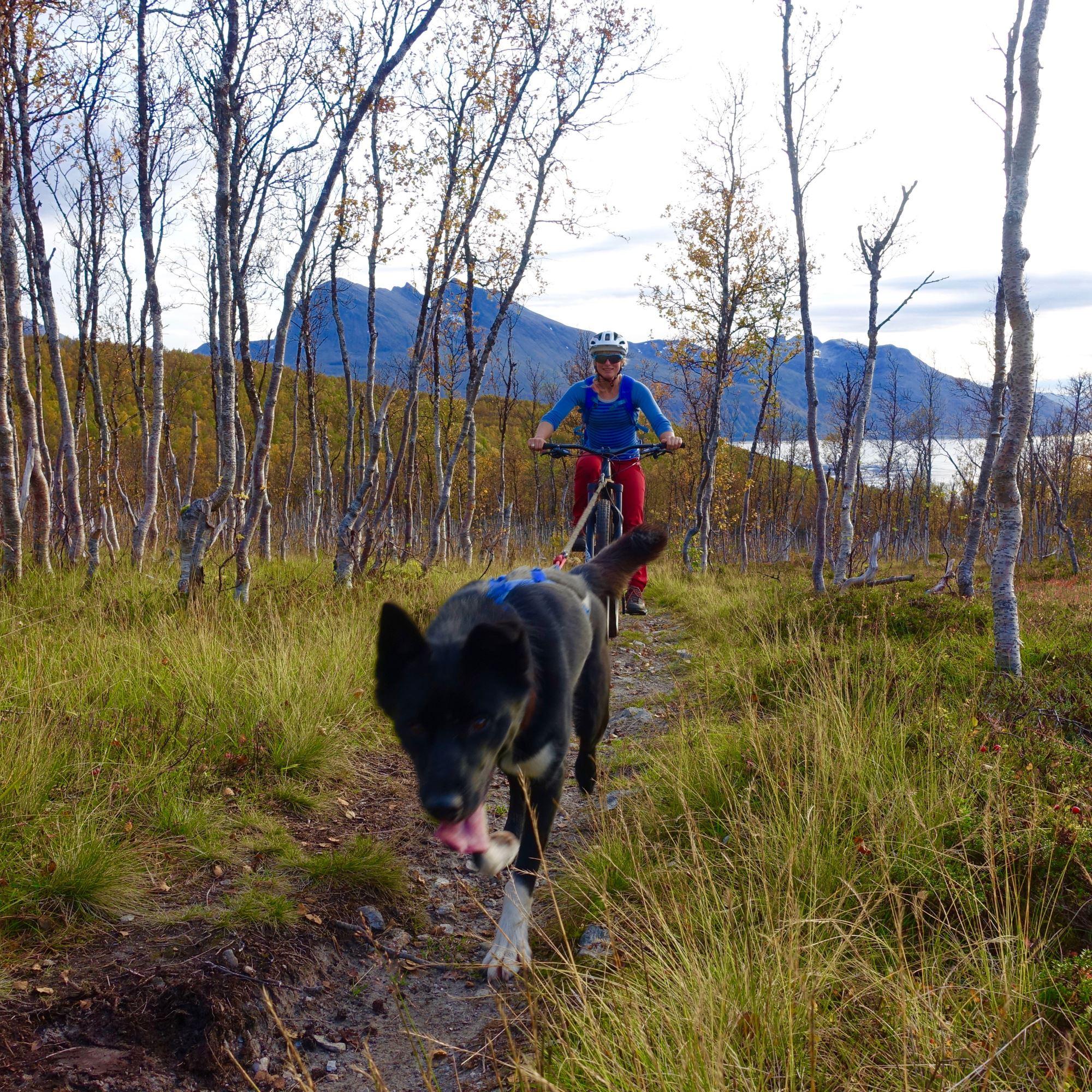 Mountainbike with husky - Bergbjørn Fjellservice