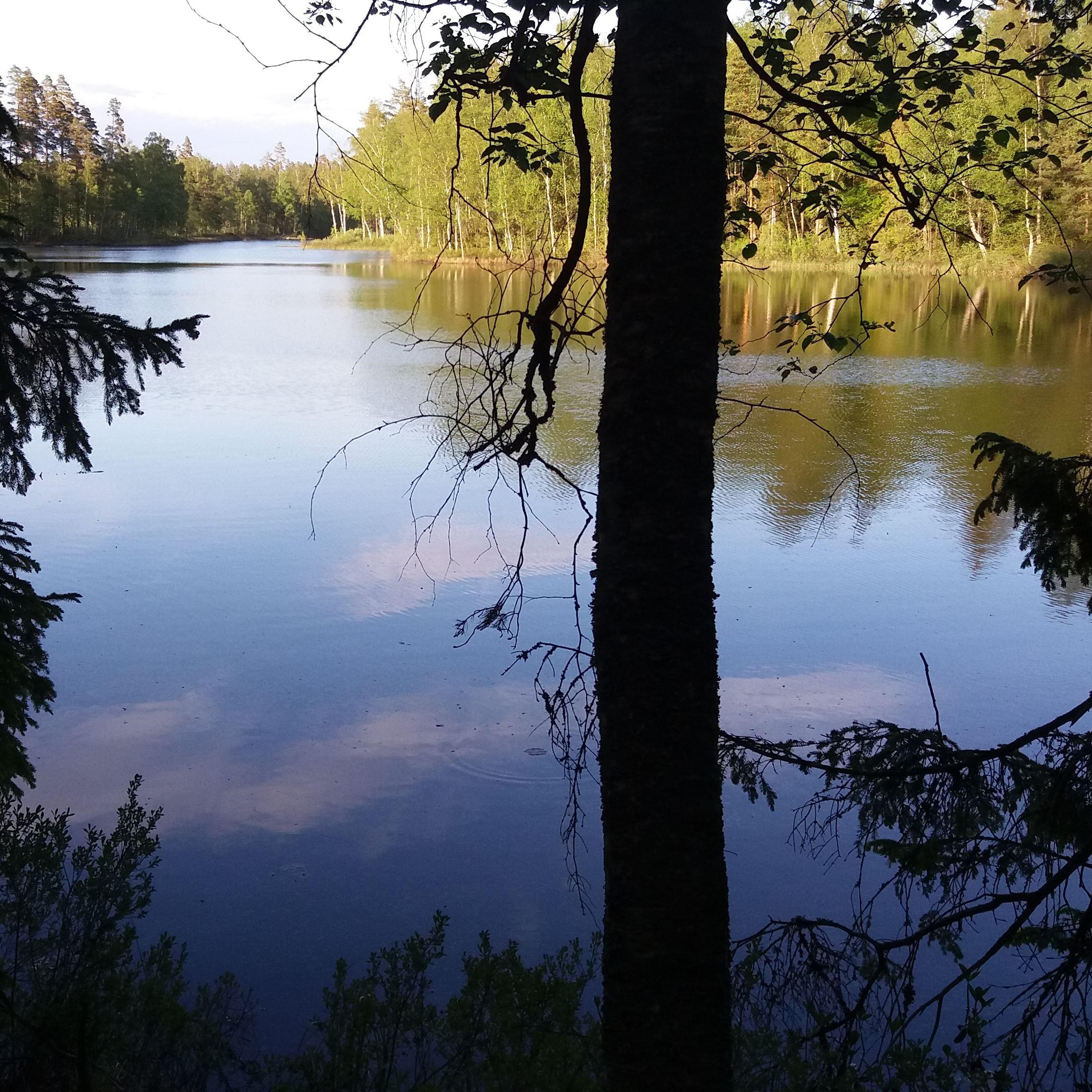Nytebodaskogen, naturreservat