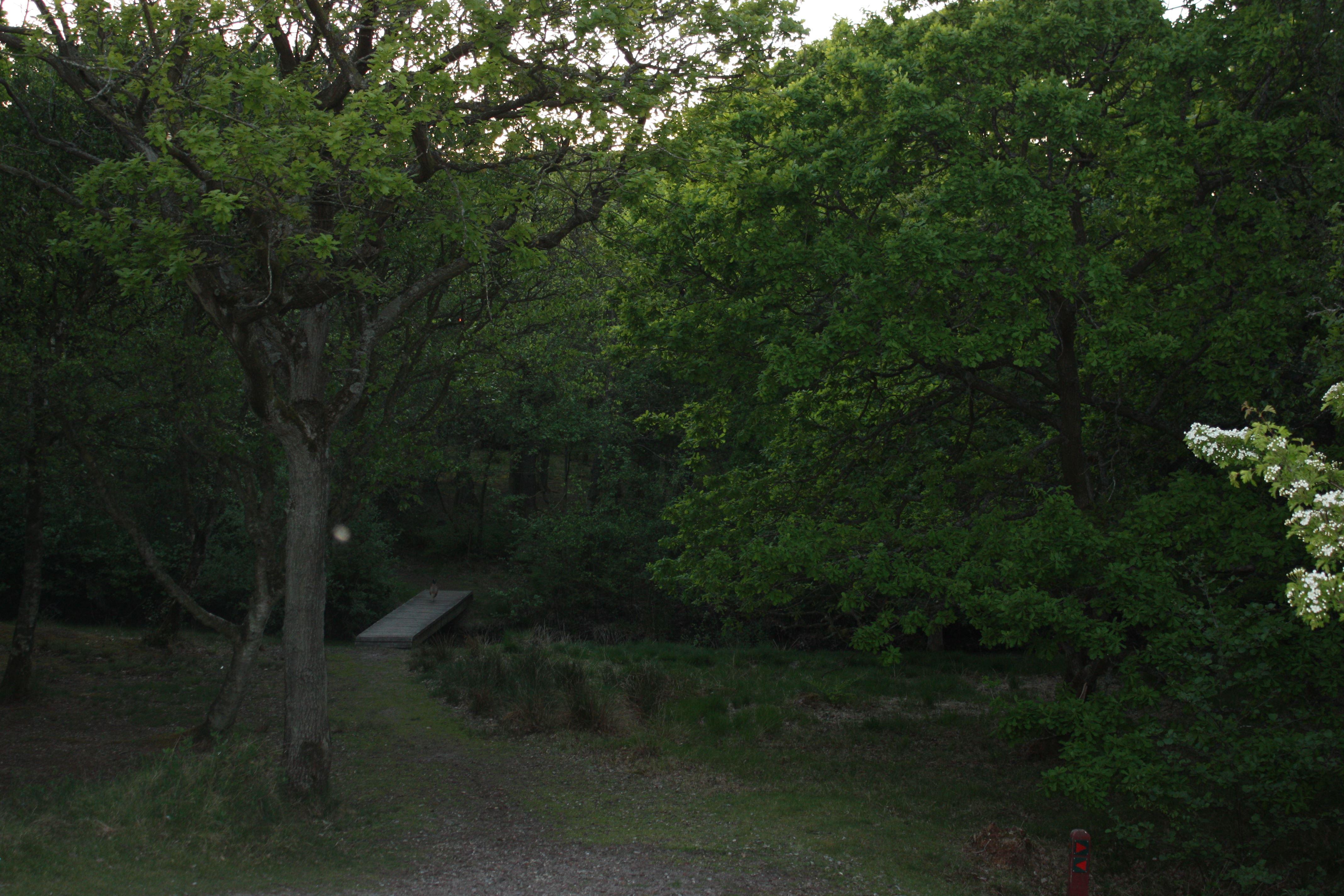 Abend im Wald (für Teenager)