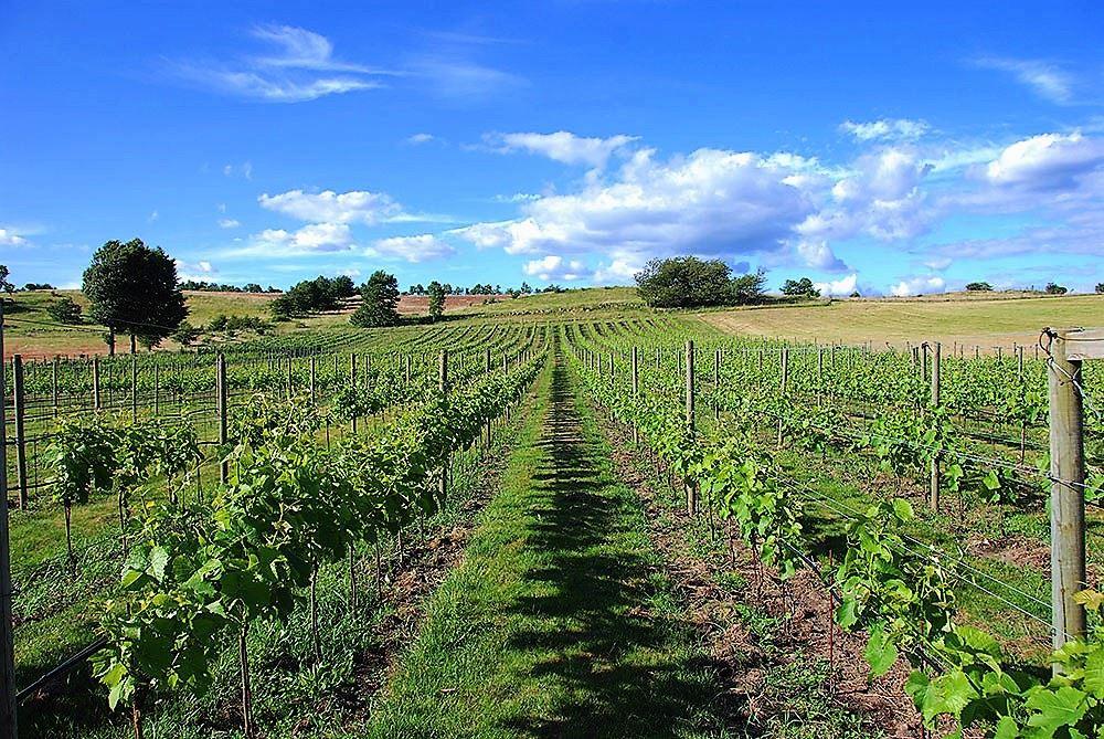 Skånska Vinresor på Österlen