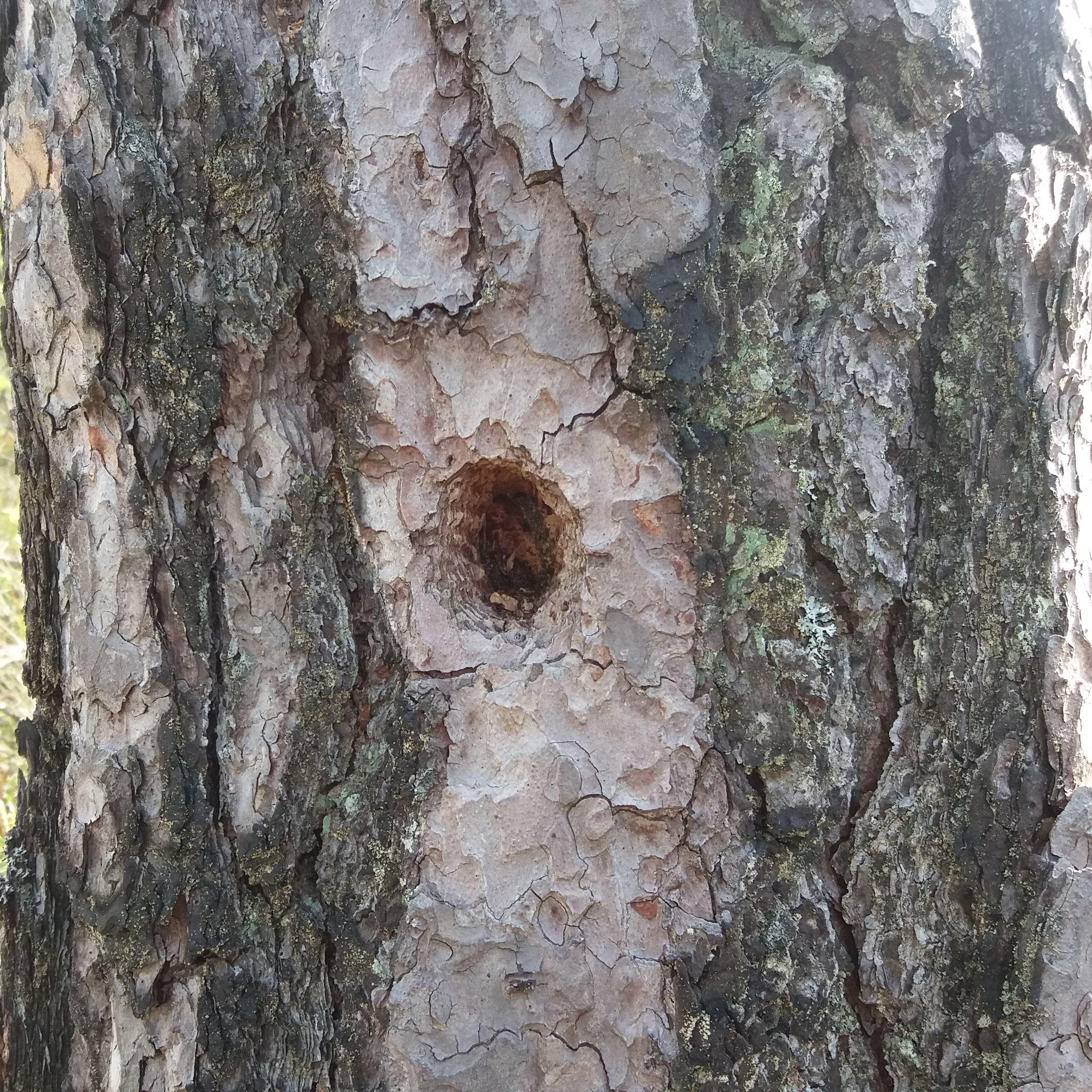 Vakö myr, naturreservat