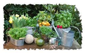 Växtmarknad i Torsåker
