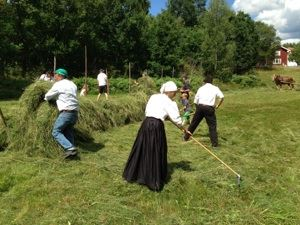 Traditional harvest in Hjorted