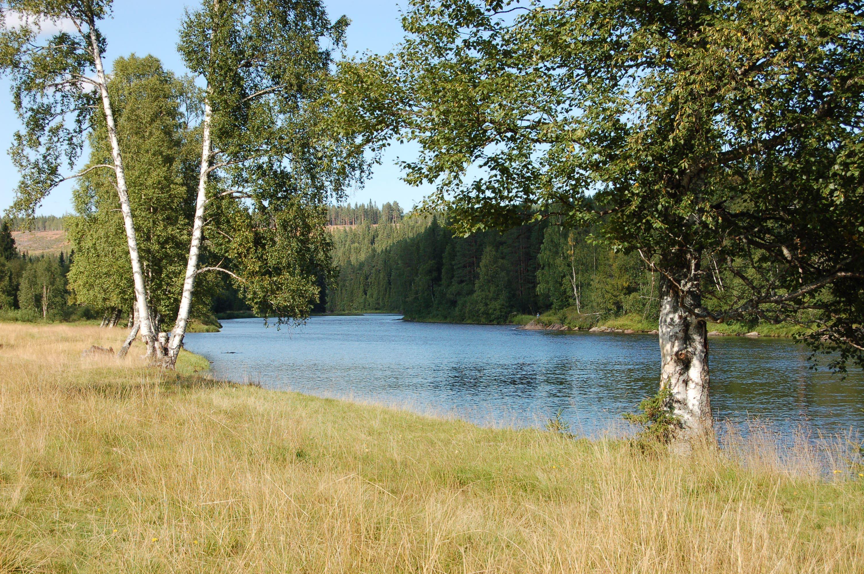 Natur- och kulturvandring i Hälla naturreservat