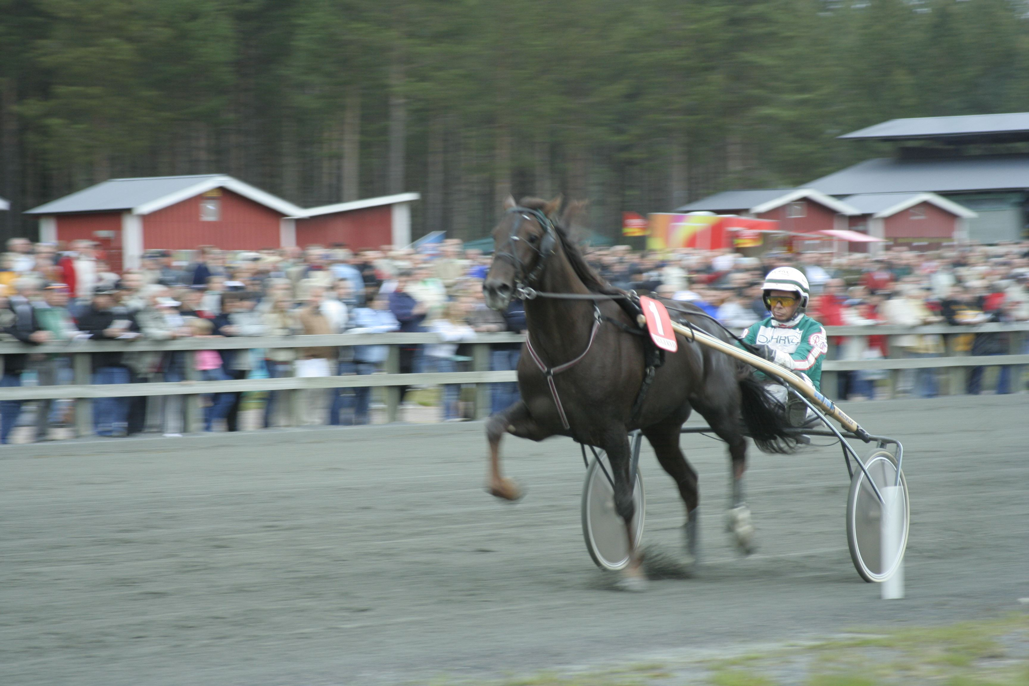 Mattias Bokinge, Travtävlingar, Vaggeryds travet