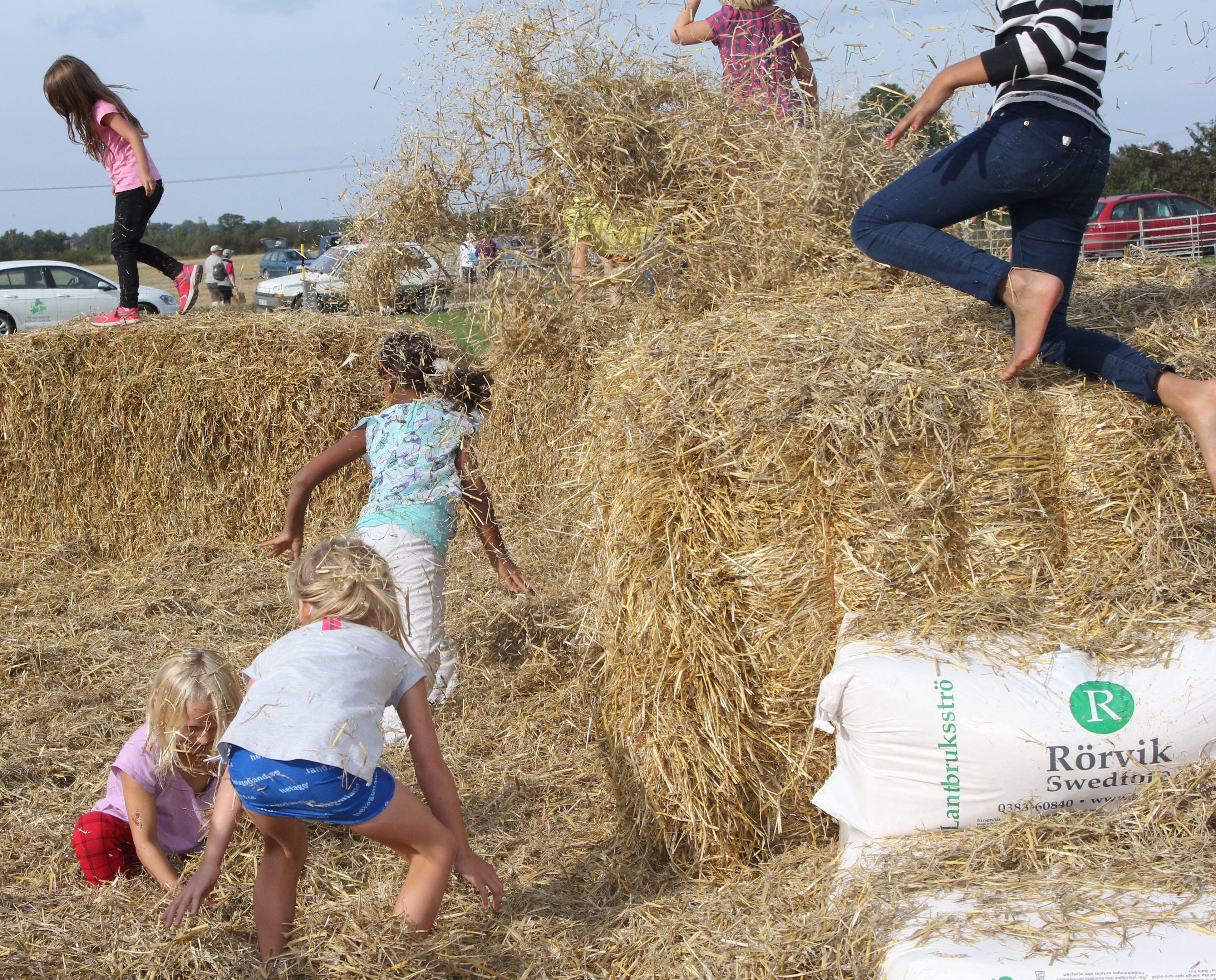 Gotlands Skördefestival 1-dagarspass