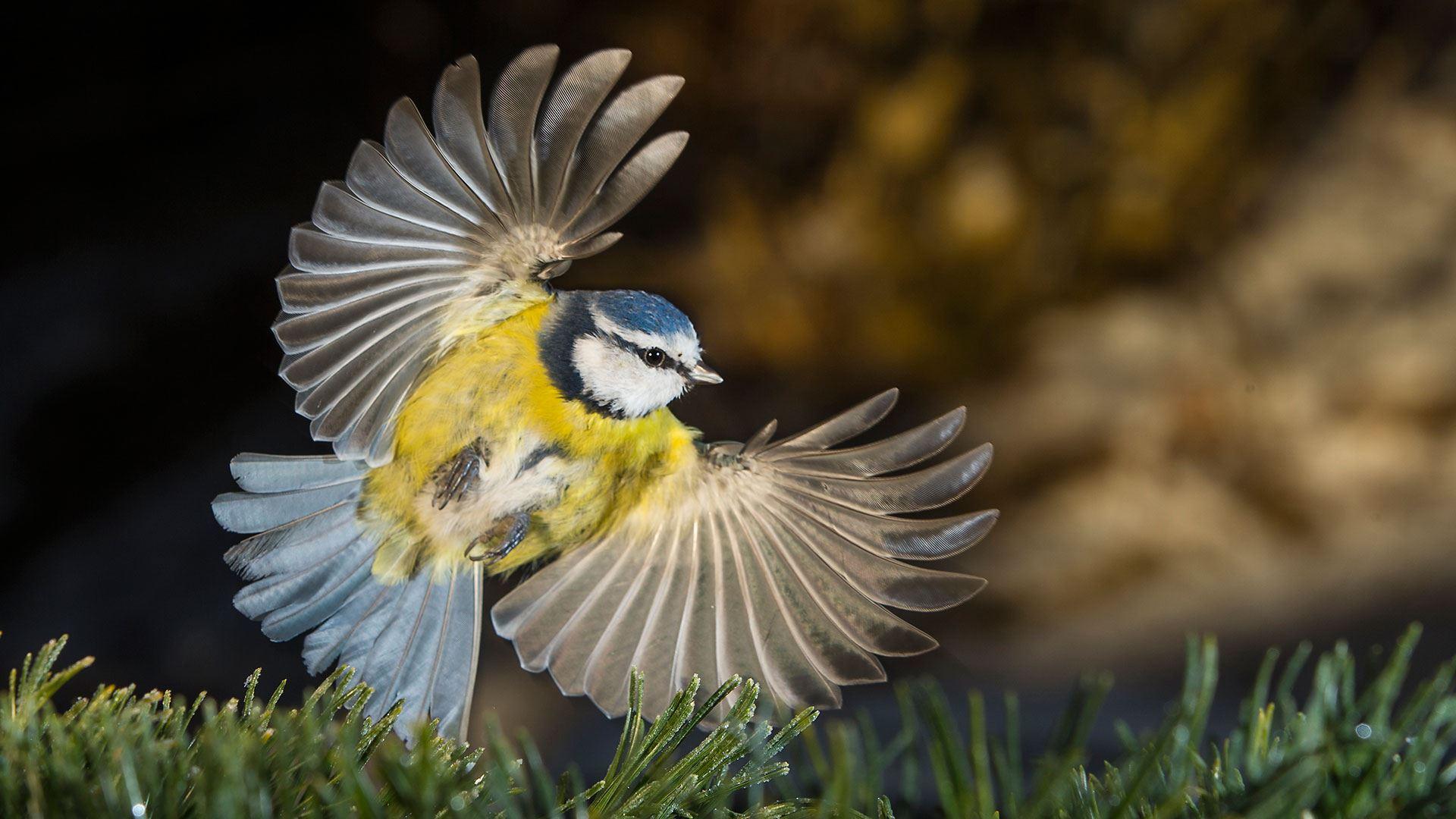 Fotograf: Gunnar Aus/N, Vinnare och förlorare i svensk natur