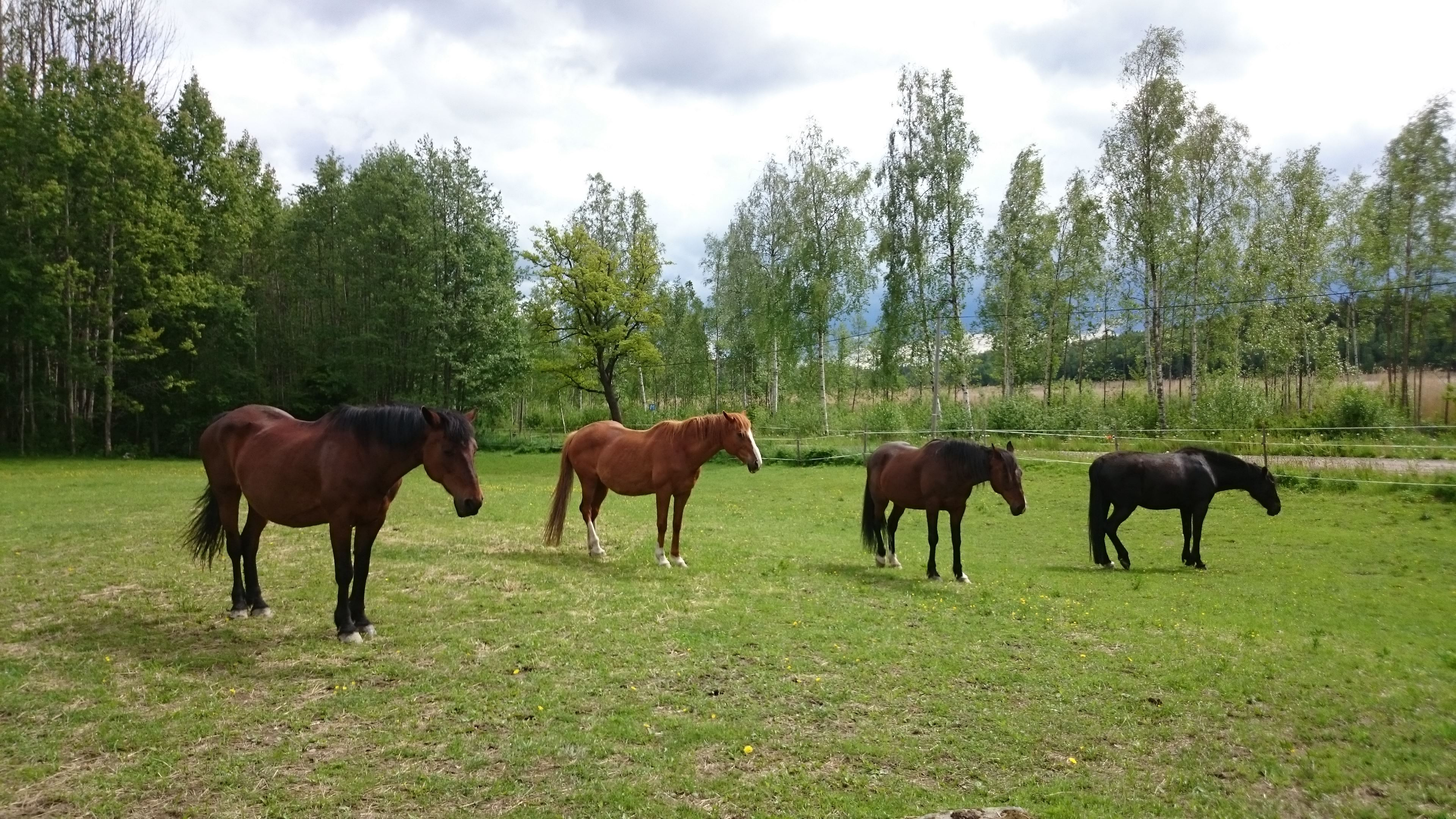 Horse holidays: focus on a horses needs and feelings