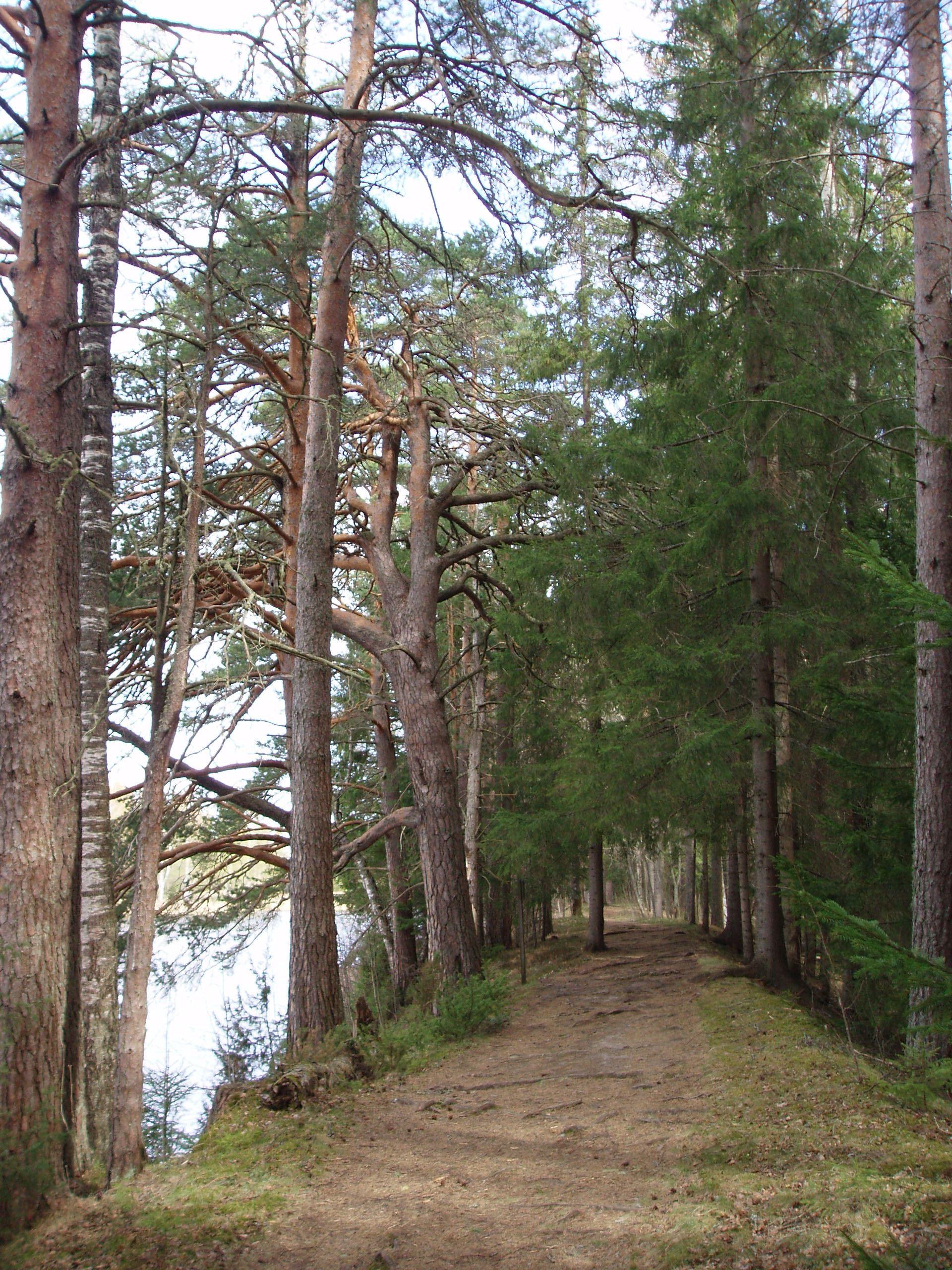 Vandring i naturreservatet Kyrkön i Järvsö