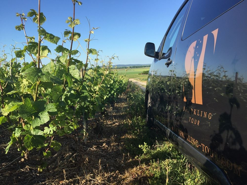 Half-Day Tour in the Champagne Region