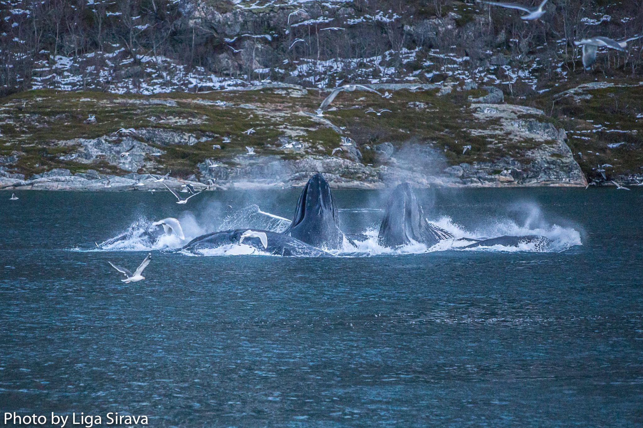 Whale Safari by RIB