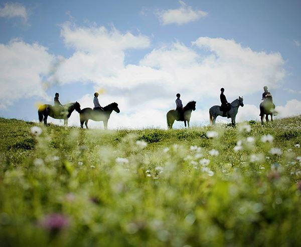 Foto: Sörbygården,  © Copy: Sörbygården, Icelandic Horseback Riding