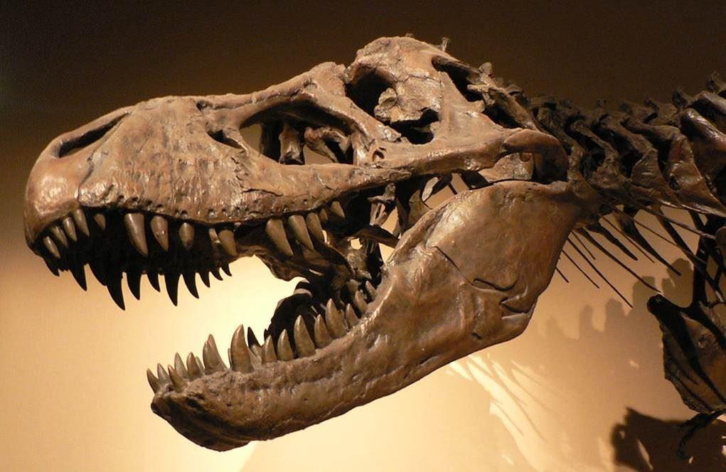 Per Uvdal - Var dinosaurierna verkligen svarta?