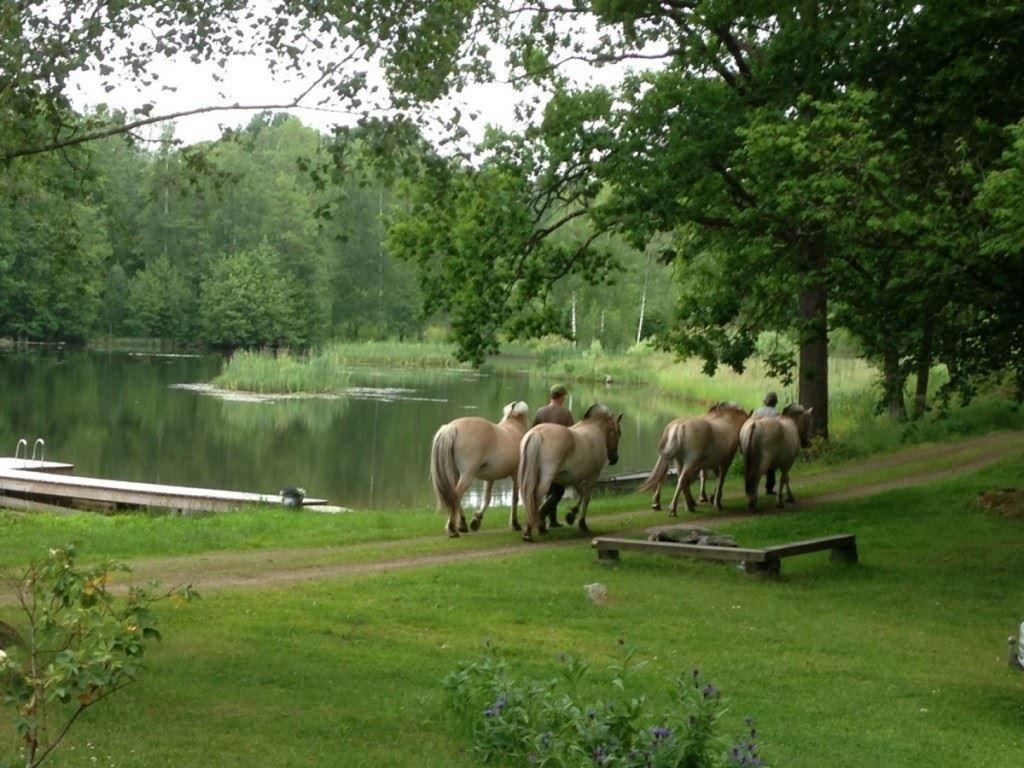Grönturens Fjordpferde