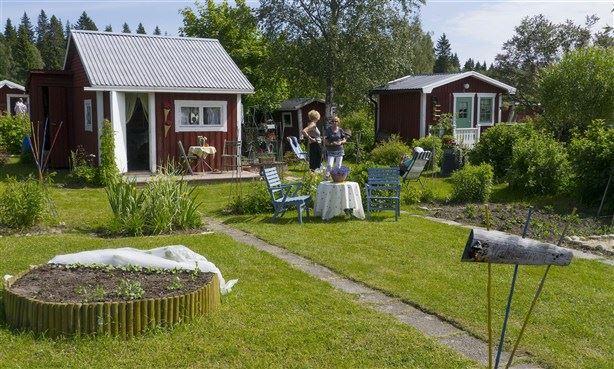 Umeå koloniträdgårdsförening 100 år