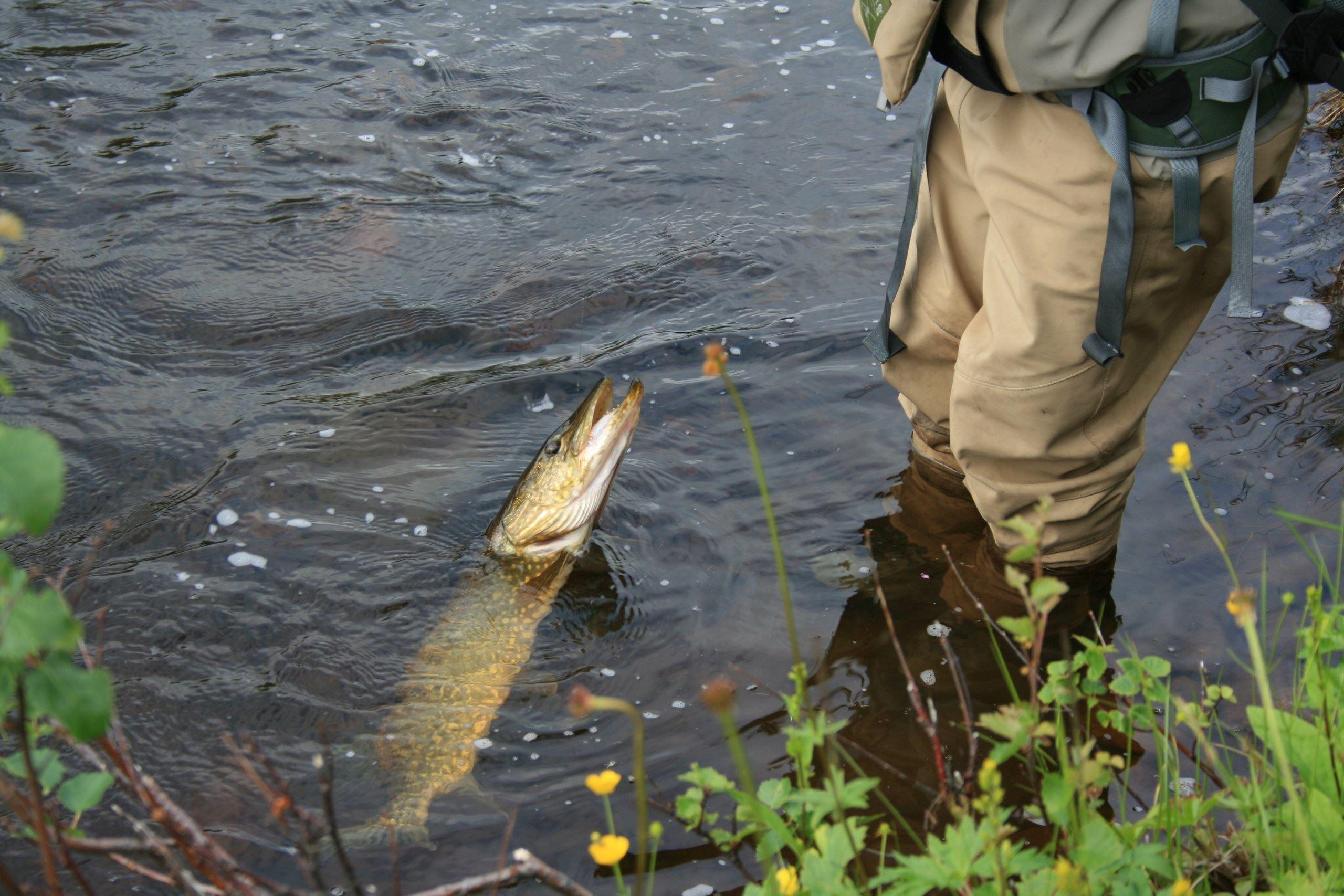 Fiskekort Öbälen & Vrången