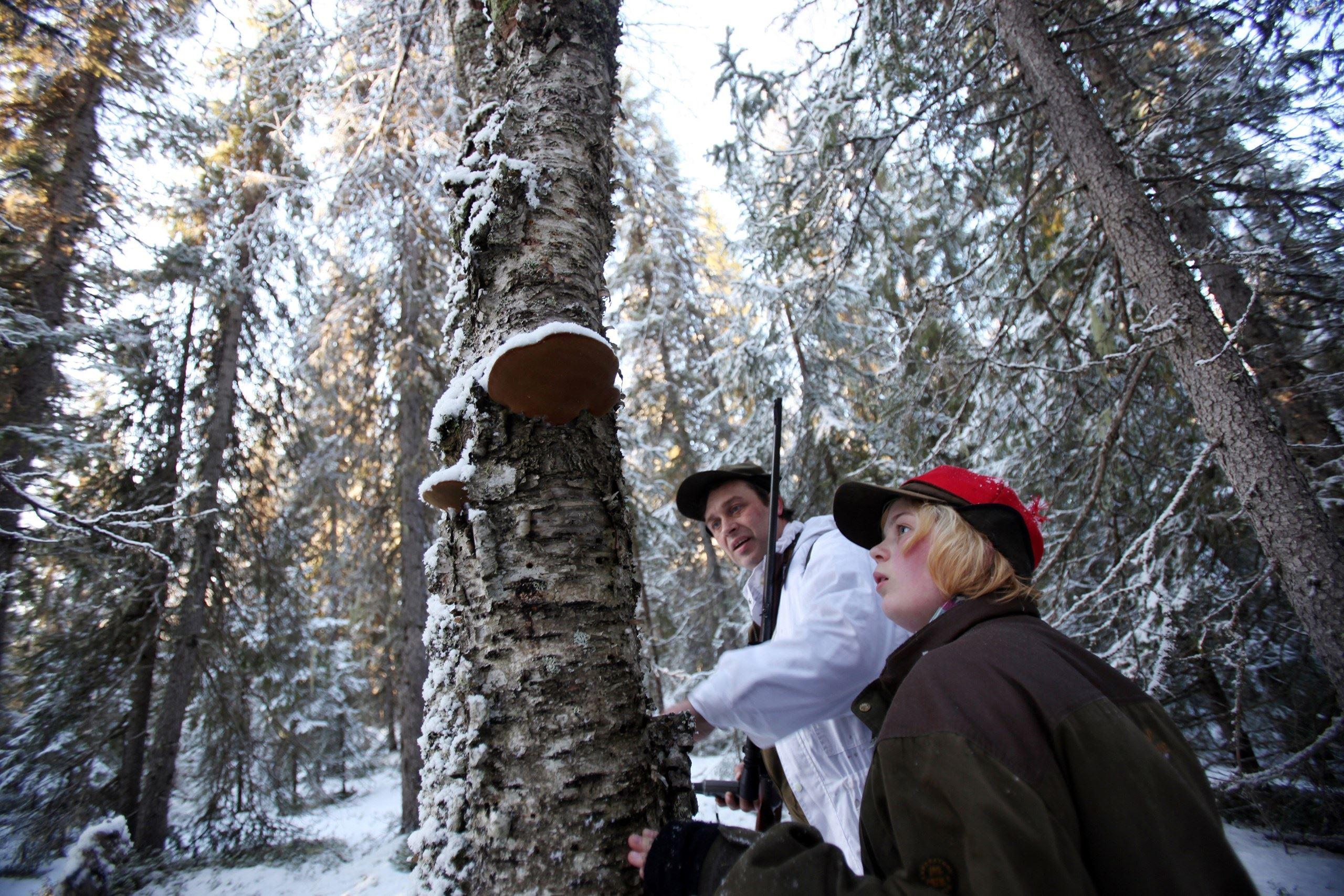 Kortjakt Storlandet, Lappland