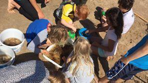 Mitt hav - Strandskola
