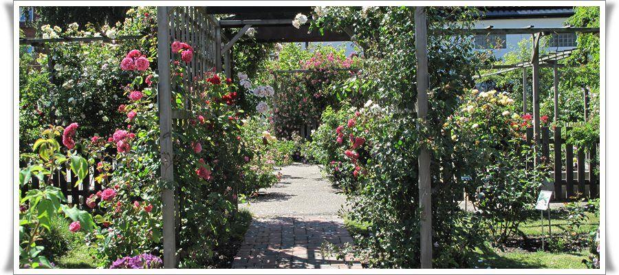 Musik i rosenträdgården