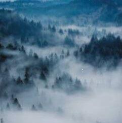 Foto: Torvalla Wärdshus  ,  © Copyright: Torvalla Wärdshus , Skog med dimma