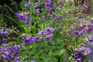 Weines Blommor- Öppen Trädgård