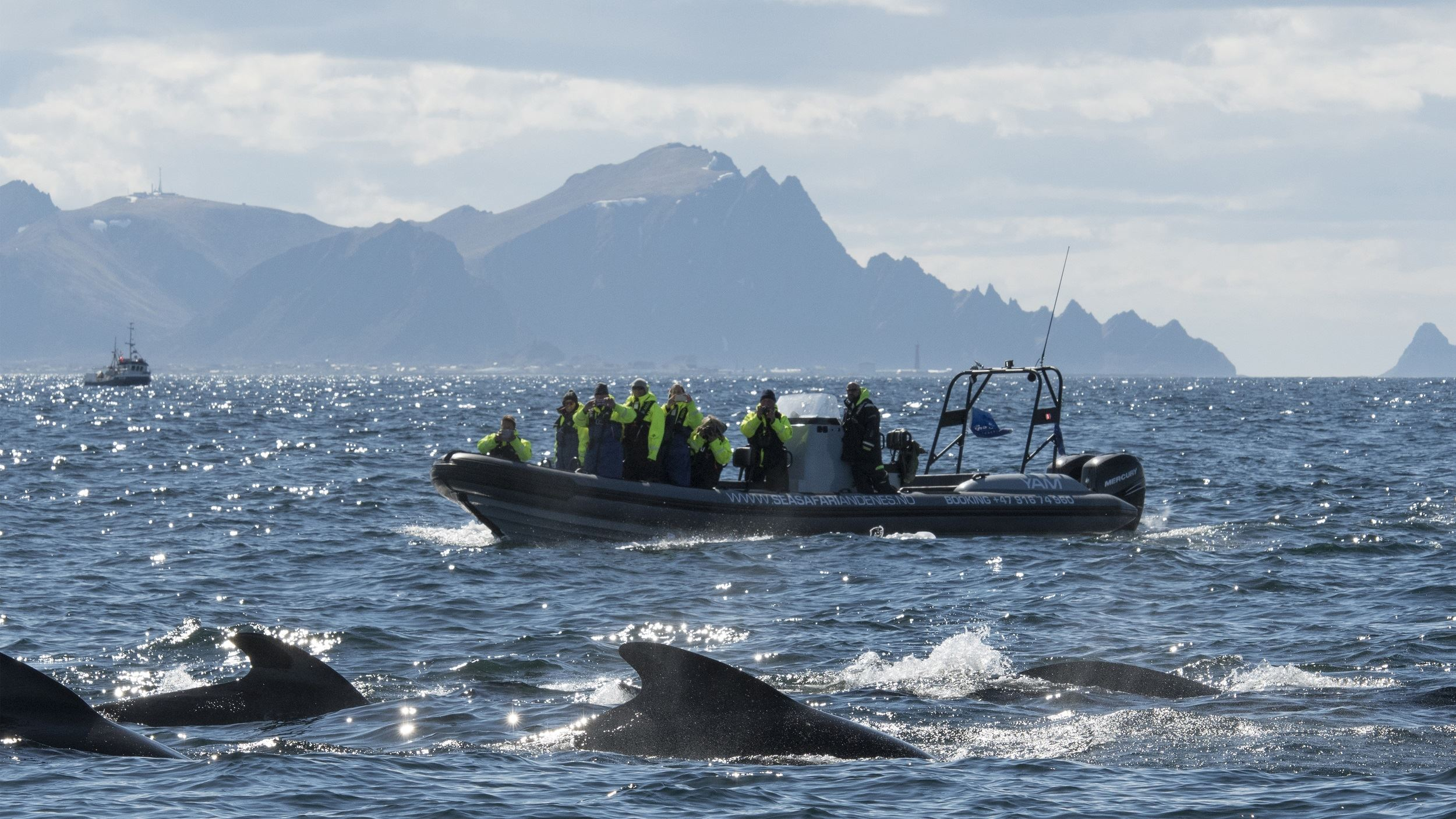 Whale Watching with Sea Safari Andenes