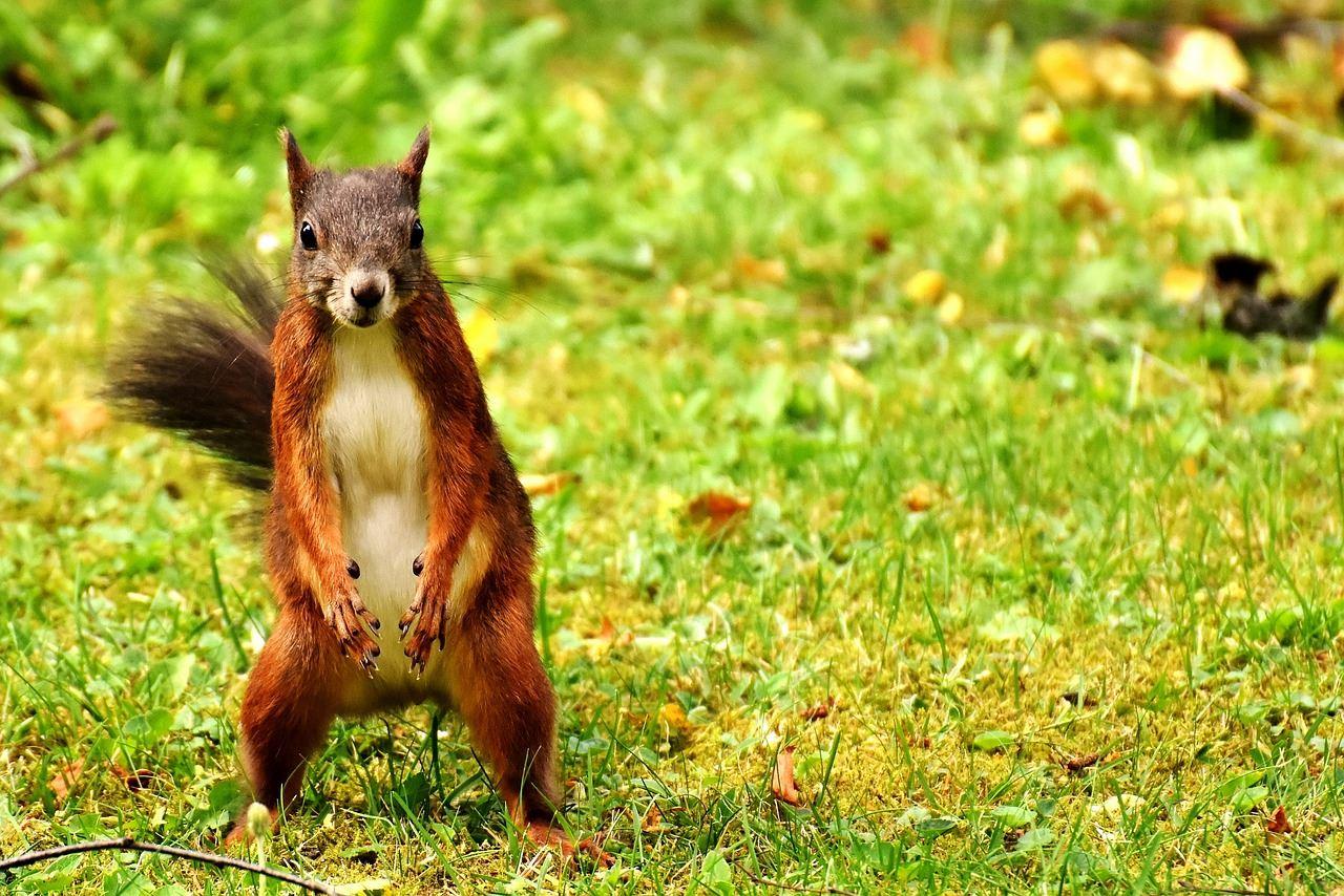© https://pixabay.com, Onsdagsguidningar på Store Mosse: Lär dig spåra djur