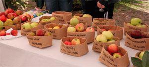 Sydhavsøernes frugtfestival 10-års jubilæum