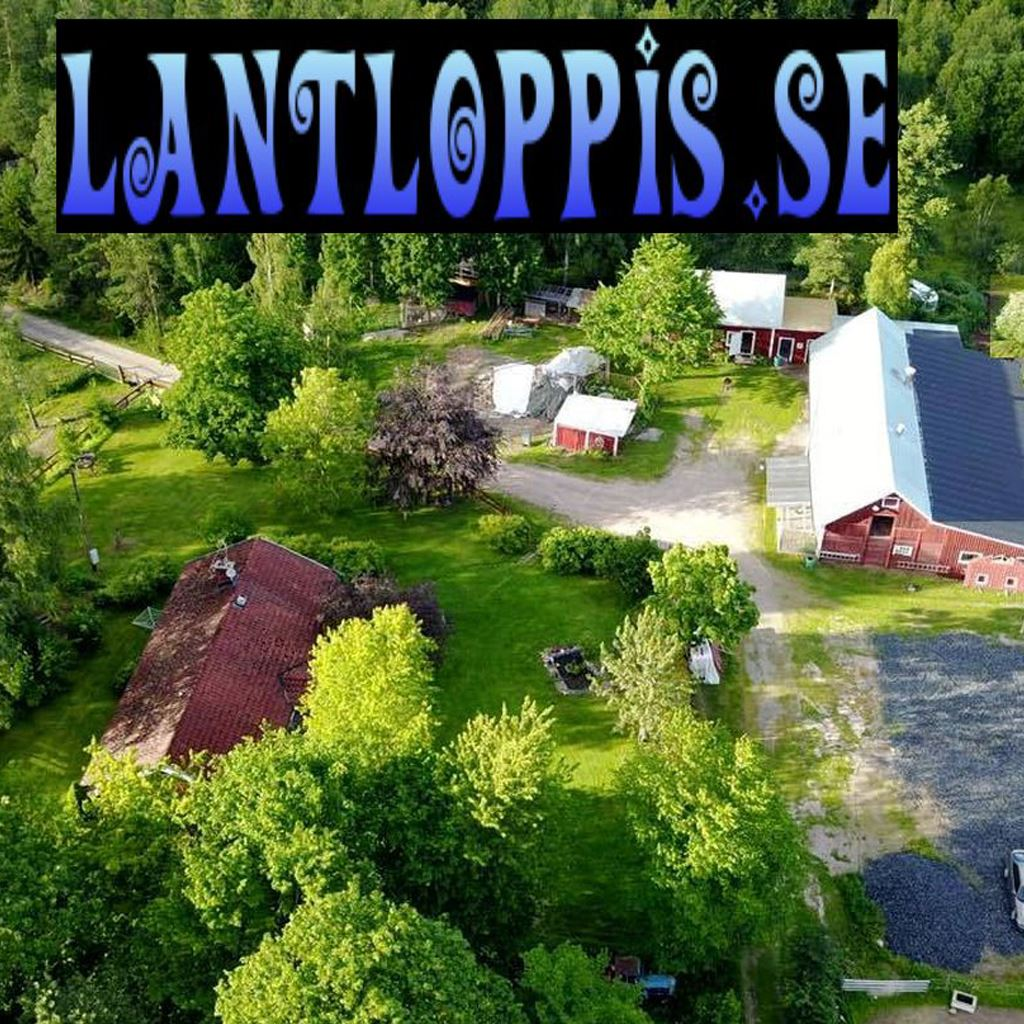 Lantloppis