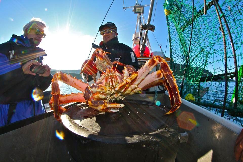 King Crab safari North Cape