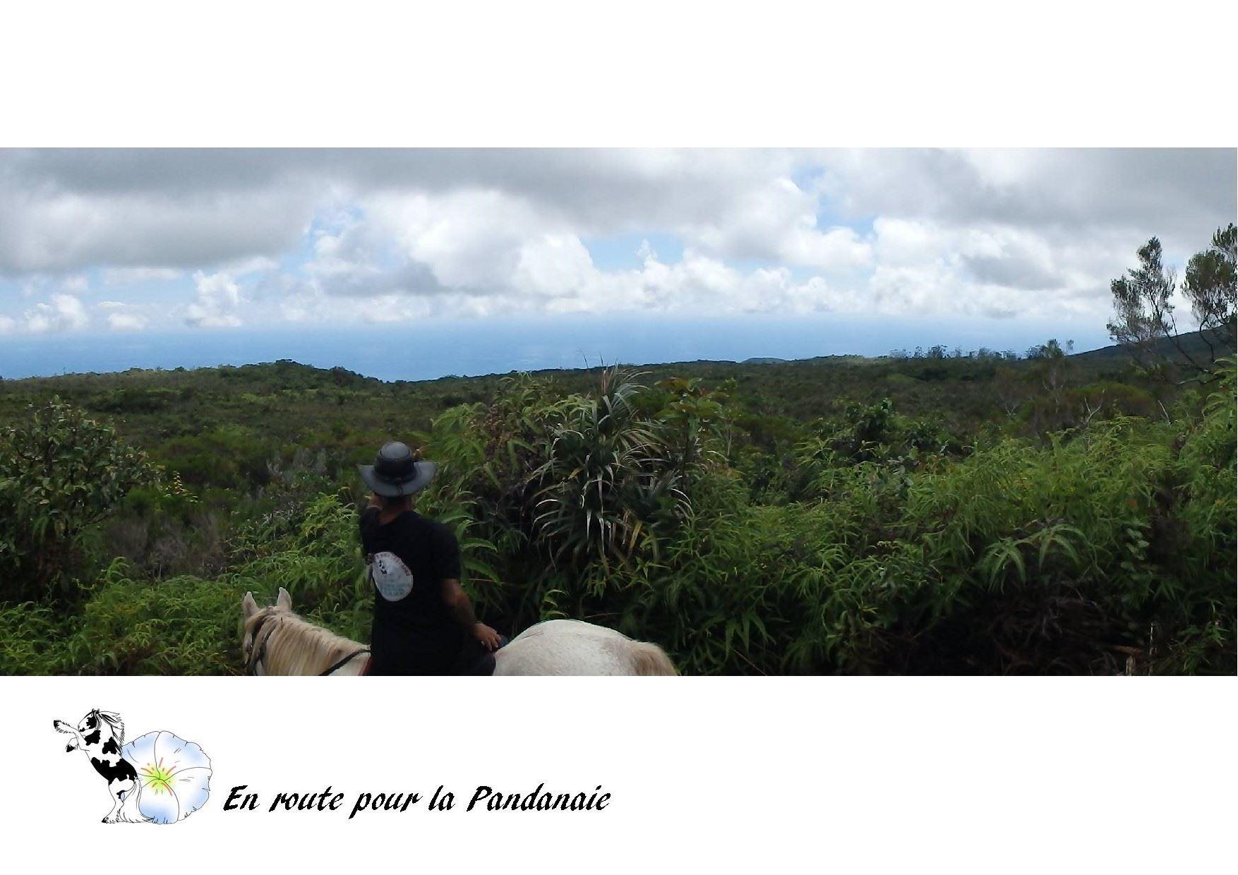 A la découverte de la pandanaie et des cascades, à cheval