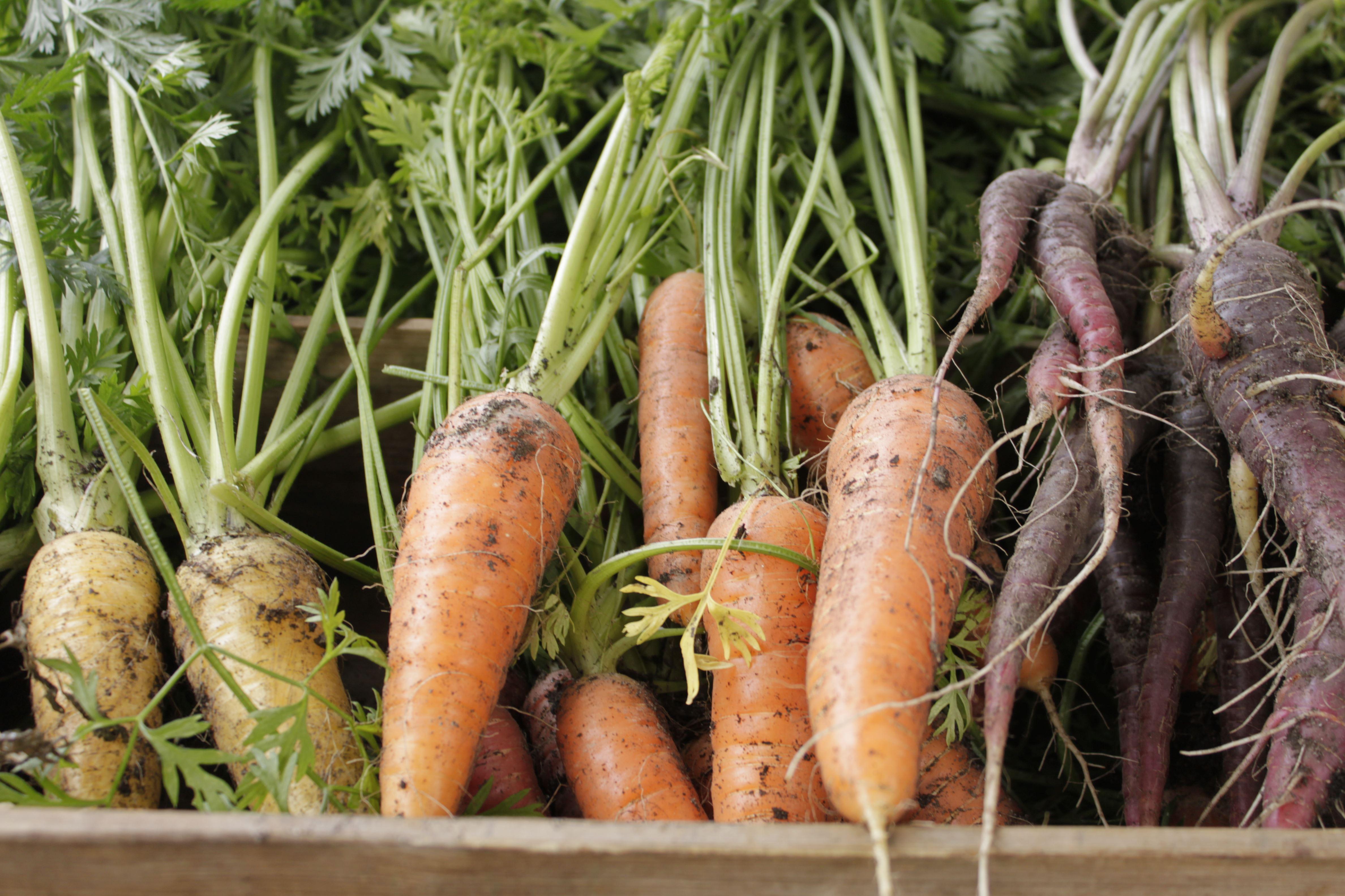 Skördevisning med grönsakstema