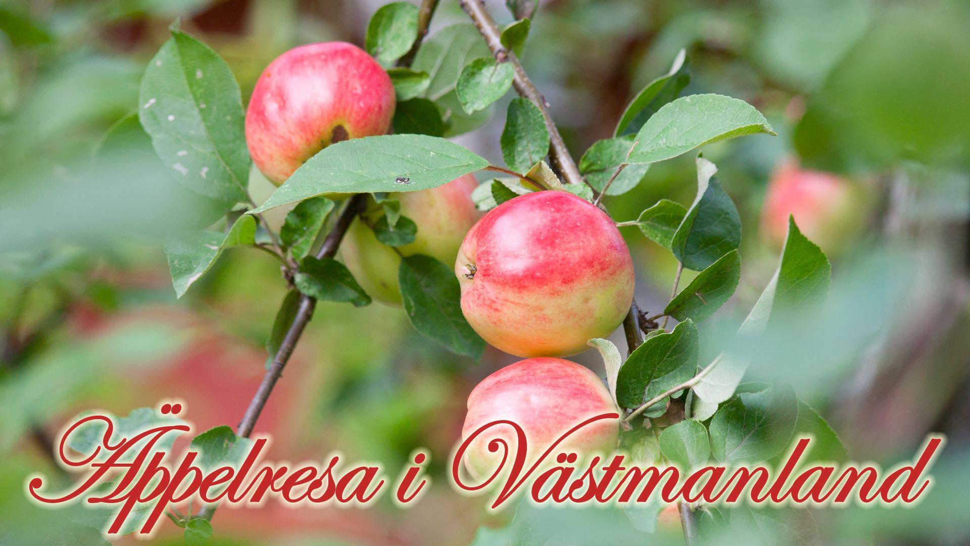 Äppelresa i Västmanland
