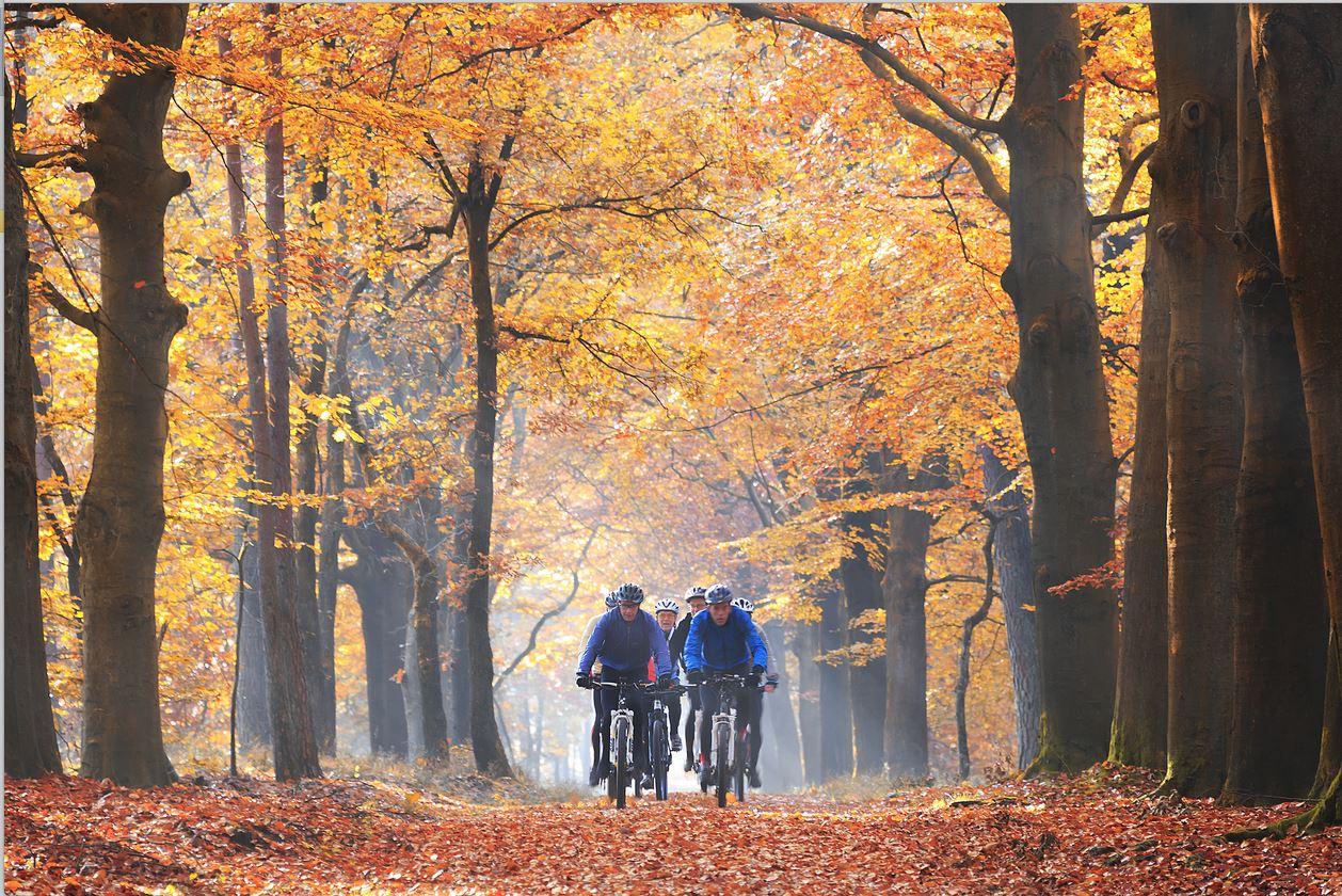 Cykeluthyrning: mountainbikecyklar Växjö MTB