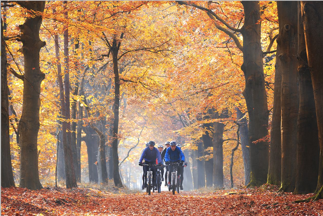 Bikerental- Växjö MTB