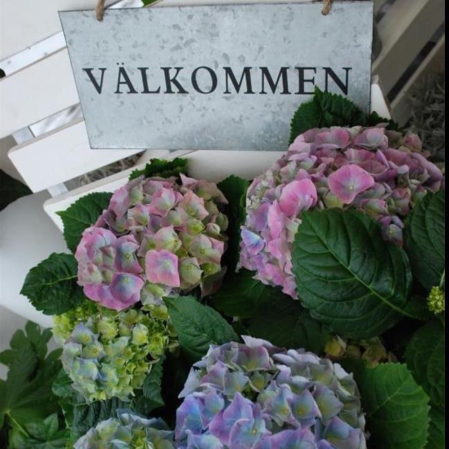 Asklunds blommor