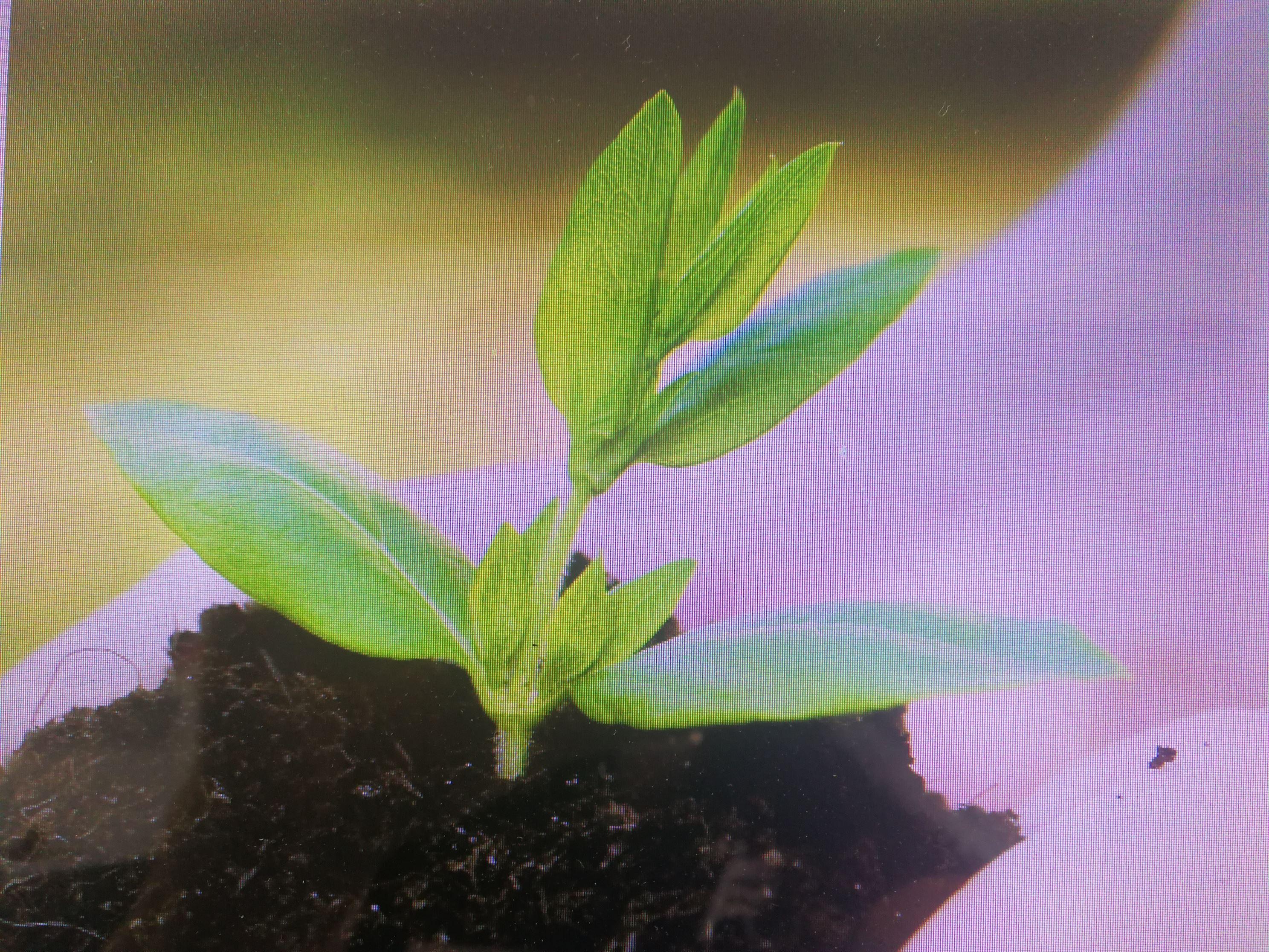 Hur trädplantering i Afrika kommer förändra världen