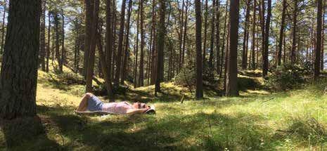 Skogsbad - rofylld vandring i Vattenrikets skogar