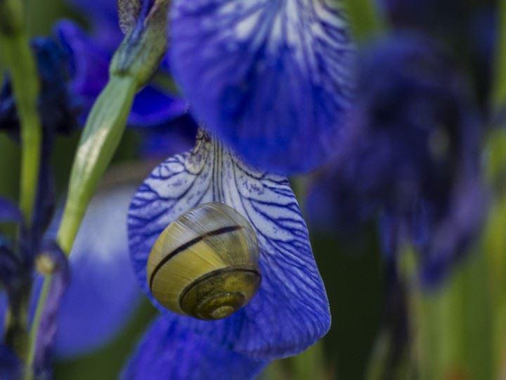 Utställning med Naturfotograferna i BioFoto Syd
