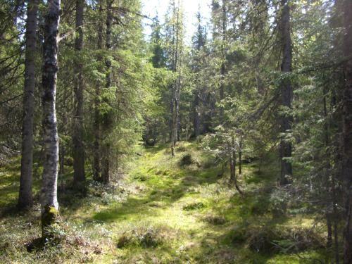 © Örnsköldsviks Kommun, Urskogsleden