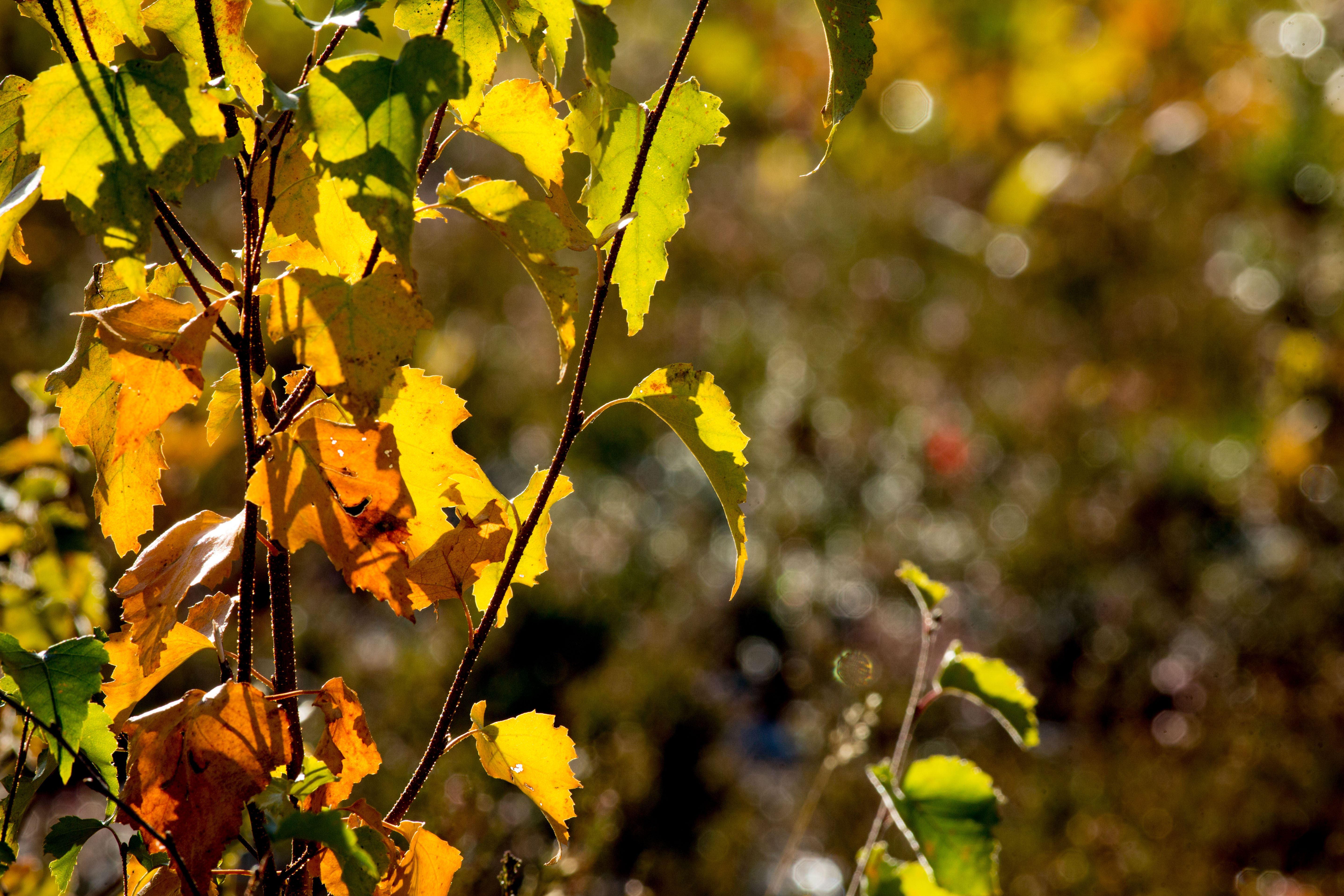 Ricke.se,  © Malå kommun, Malå Missionskyrka, en del av Equmeniakyrkan