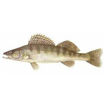Örsjön, fiske