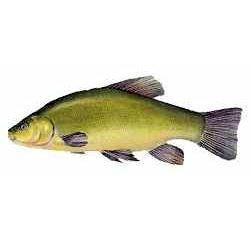 Vesslarpssjön, fiske