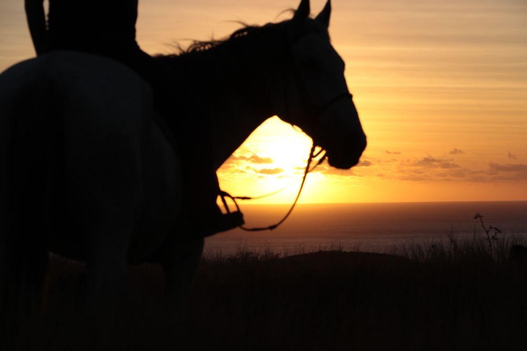 Zarlor détente chevauchées dans l'Ouest - la savane au coucher du soleil